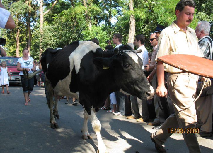Procesja zwierząt domowych w czasie odpustu św. Rocha w Mikstacie