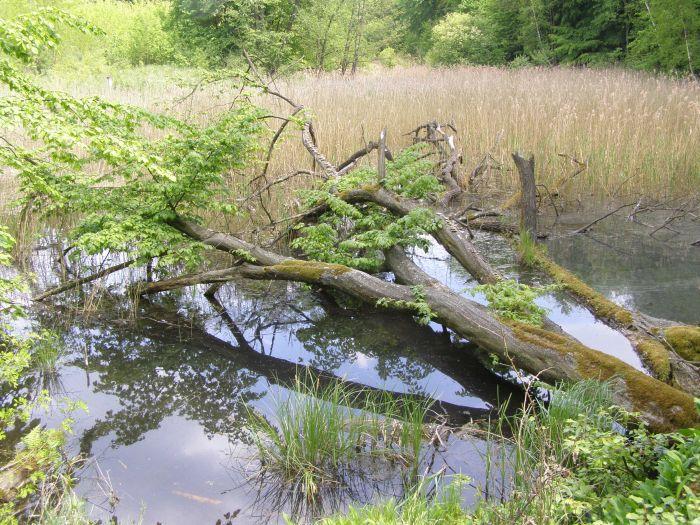 Der Landschaftspark Puszcza Zielonka