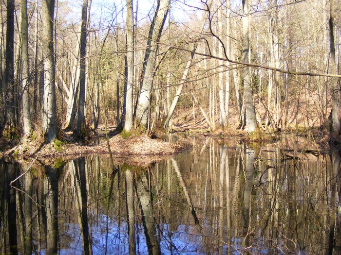 Im Sieraków-Landschaftspark