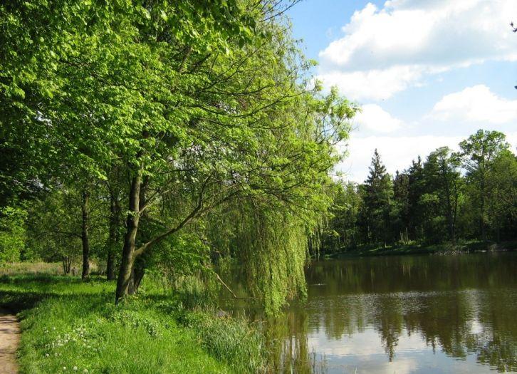 Park przypałacowy w Miłosławiu