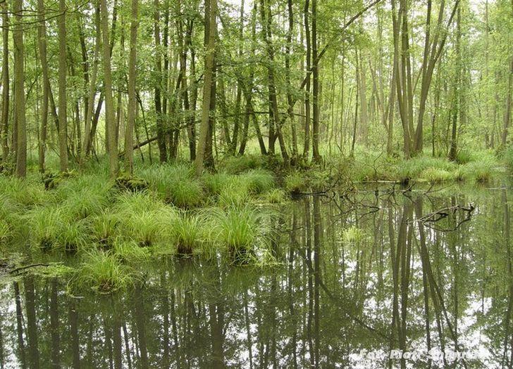 Rezerwat Olszyny Niezgodzkie
