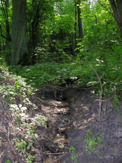 The Czeszewo Forest Nature Reserve