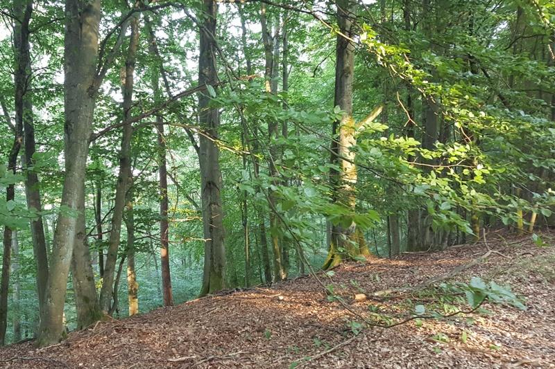 Herb Rezerwat leśny Diabli Skok