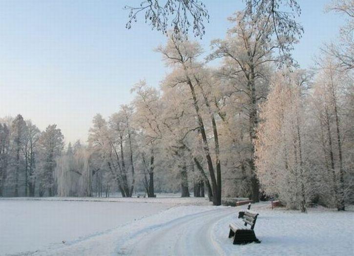 Arboretum w Kórniku - Zima też jest piękna
