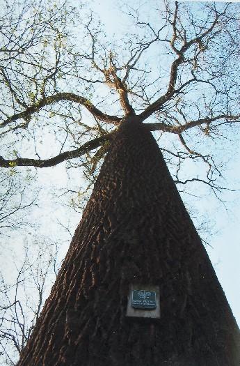 Rezerwat leśny Dębina w Wągrowcu