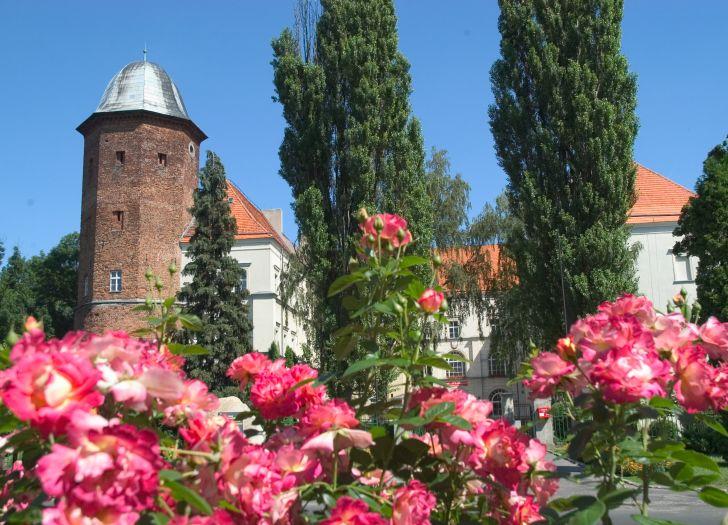 Zamek w Koźminie