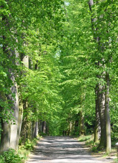 Herb Park w Gołuchowie