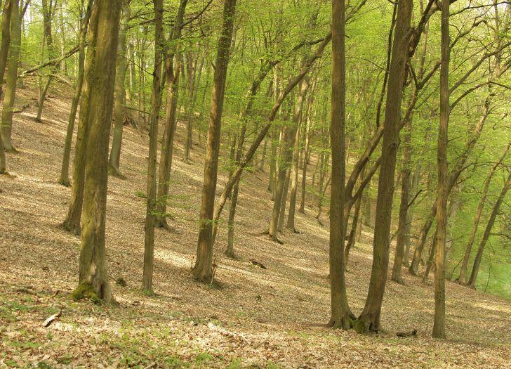 Rezerwat Las liściasty w Promnie