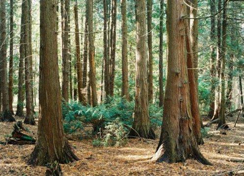 Herb Olejnica ścieżka przyrodniczo-leśna