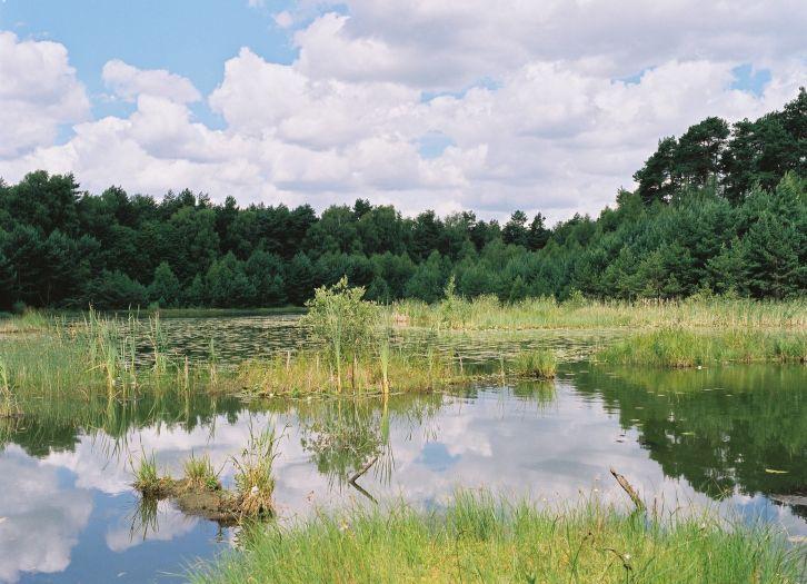Ścieżka przyrodniczo-leśna w Olejnicy