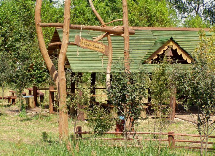 Leśna Szkoła w okolicy Włoszakowic