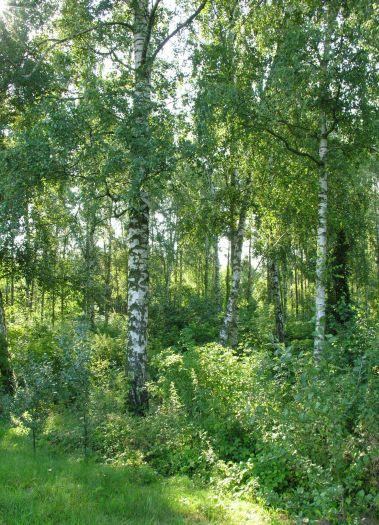 Rezerwat Dwunastak