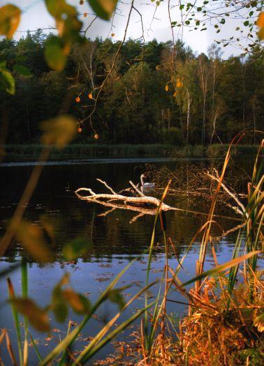 Rezerwat krajobrazowy Kuźnik