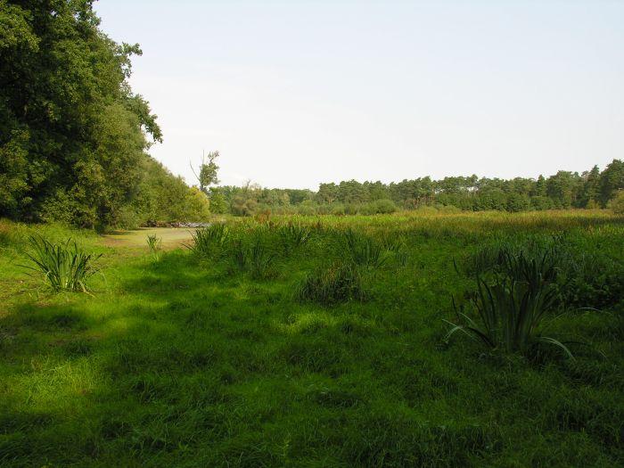 Rezerwat Czeszewski Las