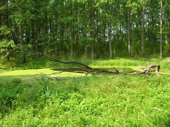 Rezerwat Las Czeszewski