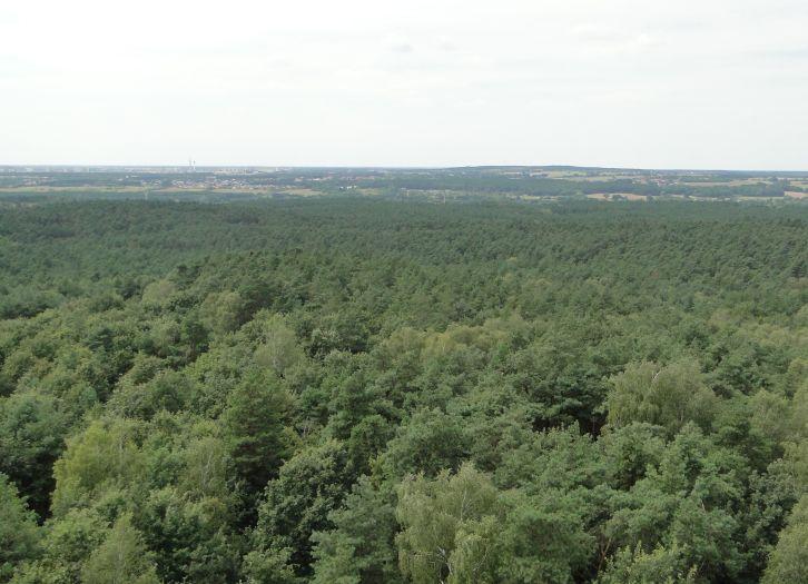 Widok w kierunku Poznania. Po lewej stronie widoczne wieże telewizyjne na Piątkowie