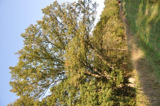 Herb Rezerwat leśny Czeszewski Las